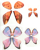 279 Butterfly Wings